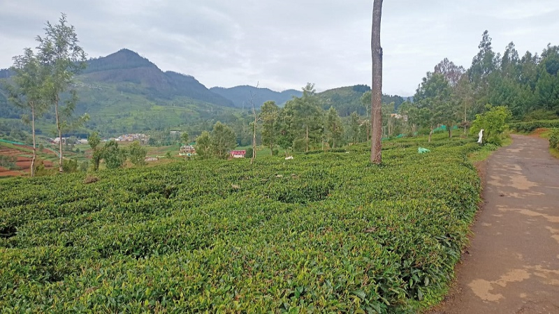 ₹25 Lac 10000 sq.ft. Residential Plot For Sale in Kappachi Ooty