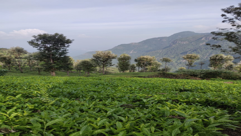 ₹ 43.75 Lac | 25 cents Residential Plot For Sale in Coonoor