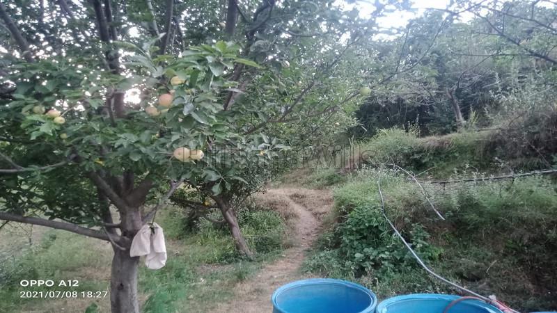 ₹50 Lac|86 acres Agriculture Land For Sale in Kumarsain Shimla