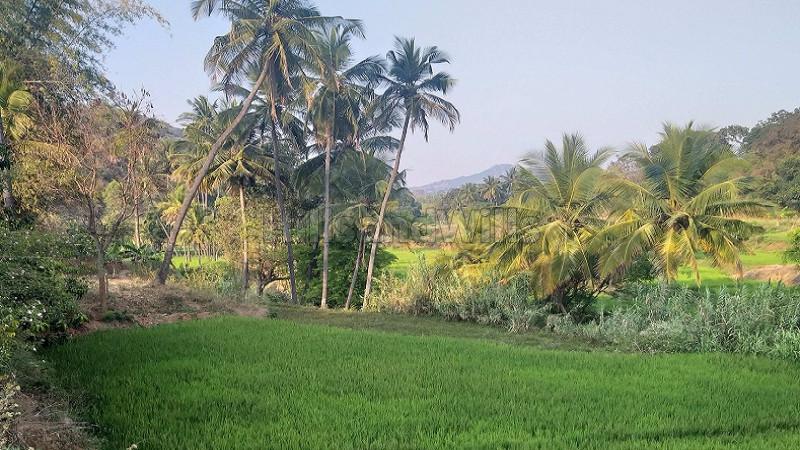₹98.50 Lac|6.16 acres Agriculture Land For Sale in Alathur Nadu Kolli Hills