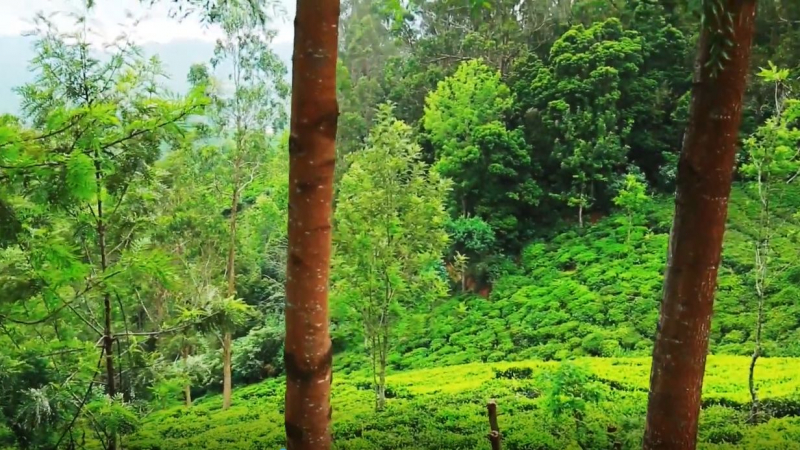 ₹42 Lac 40 cents Agriculture Land For Sale in Ketti Palada Ooty