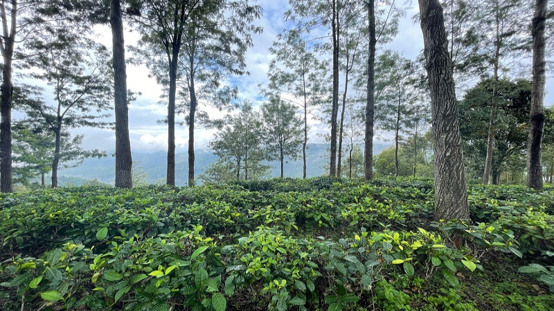 ₹1.15 Cr|2.5 ares Agriculture Land For Sale in Kotagiri
